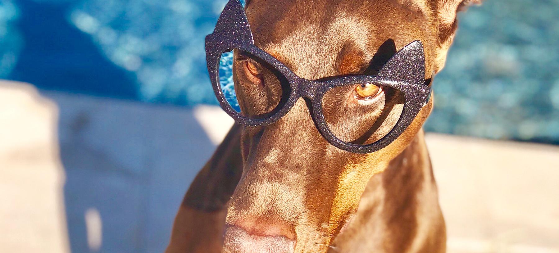 Vos lunettes… sans verres !